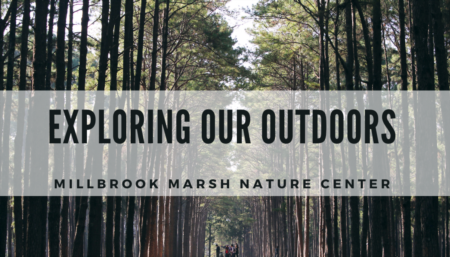 Exploring our Outdoors | Millbrook Marsh Nature Center