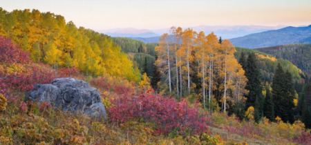 Fall Colors in Steamboat Springs