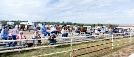 Head over to the Routt County Fair!