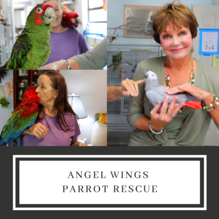 Angel Wings Parrot Rescue with Susan Swanson!