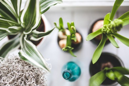7 Easy House Plants To Keep Alive