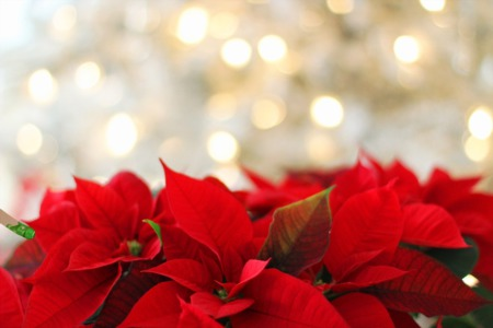 Giving Your Yard Some Holiday Cheer