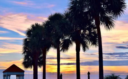 7 Common Palm Trees in SWFL