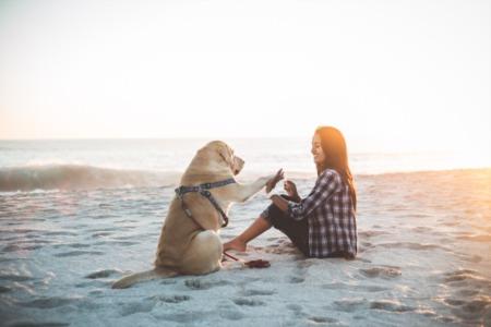 Best Dog Beaches Near Long Beach California