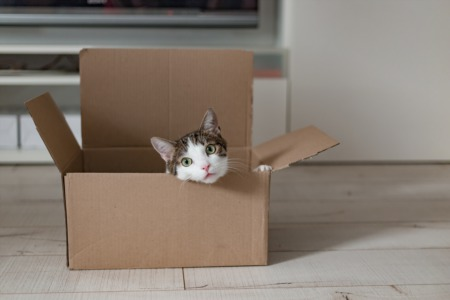 3 Tips for Moving Into Your New Home in Lakewood or Long Beach With a Cat