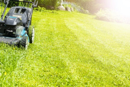 4 Pros and Cons of Using Herbicides to Control Weeds
