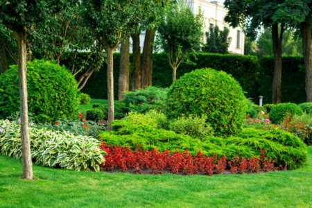 4 Flowering Shrubs That Can Take the Summer Heat