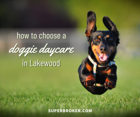 How to Choose the Right Dog Daycare in Lakewood