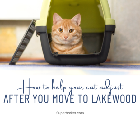 How to Help a Cat Settle Into Your New Home in Lakewood