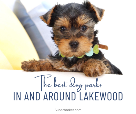 The Best Dog Parks in Lakewood