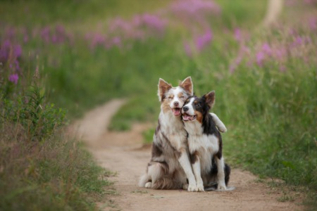 How to Protect Your Fur Babies From Poison Hemlock