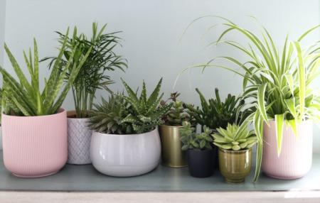 3 Fragrant Houseplants to Freshen the Air