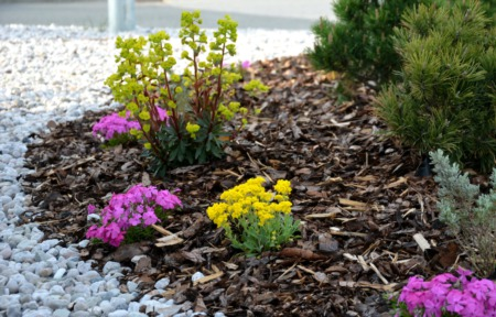 2 Alternatives to Using Artificial Turf for Your Long Beach Landscape
