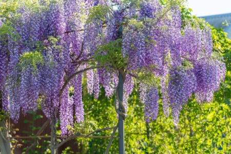 5 Plants You Should Never Put in Your Yard