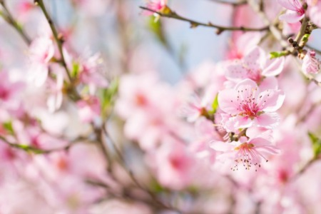 6 Tips for Selling a Home in Spring