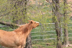 Finding the Right Horse Property in Palos Verdes