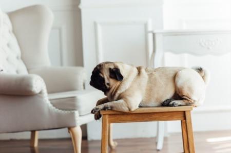 Selling With Pets: Tips to Prepare and Show Your Home