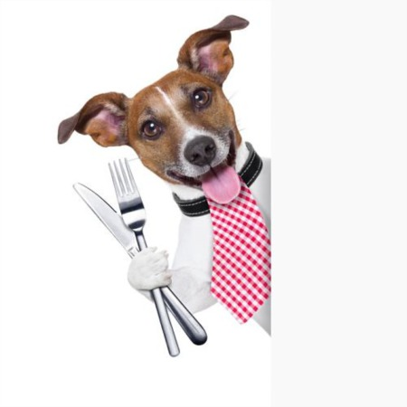 Dining out with your dog in Spokane