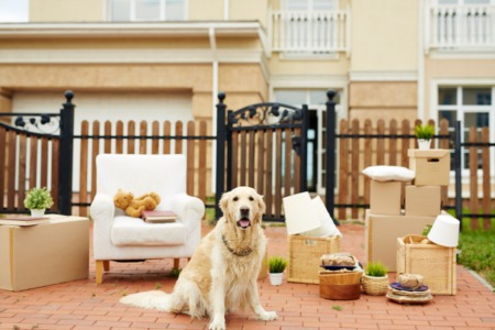 Pets & Showings: Proactive Management Tips for a Less Stressful Home Sale!