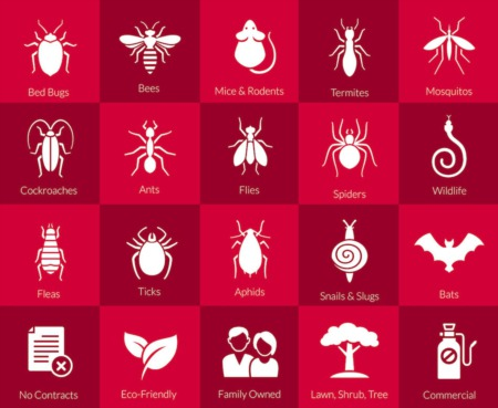 How To Identify Signs of Pests in Your Home