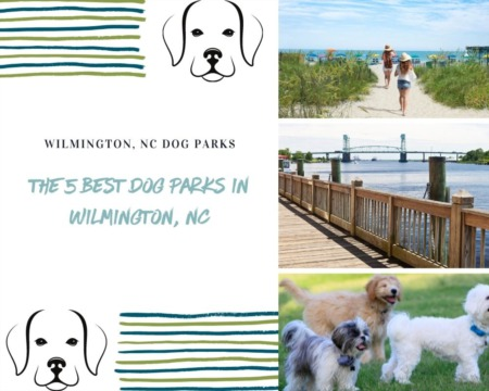 The Five Best Dog Parks in Wilmington, NC