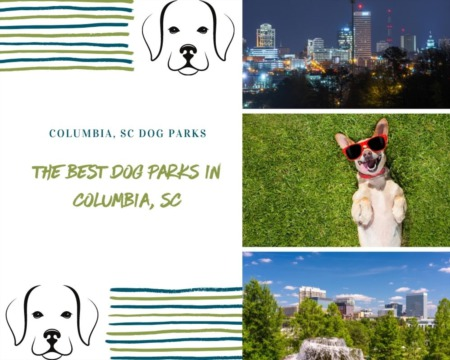 The Best Dog Parks in Columbia, SC