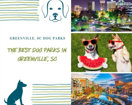 The Best Dog Parks in Greenville, SC
