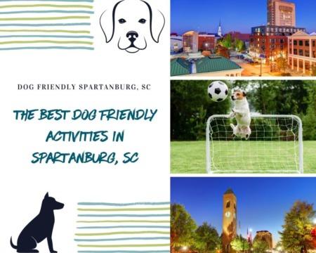 The Best Dog Friendly Activities in Spartanburg, SC