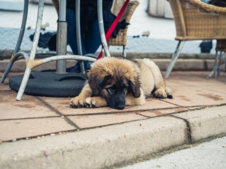 What Dog-Friendly Restaurants Can You Find in Myrtle Beach, SC?