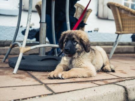 Charleston Dog Friendly Businesses