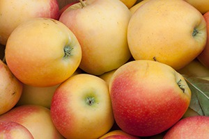 Reed Valley Orchard Serves up the Best Apples in Central Kentucky!