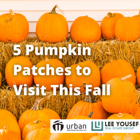 5 Pumpkin Patches to Visit This Fall
