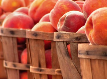 Get Something Fresh to Eat at the Temple Farmers Market August 15