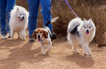 Walk Your Dog at Paws for a Purpose April 23