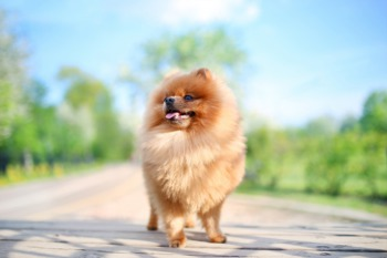 Bring Your Pets to the Waggin Trail Festival June 11