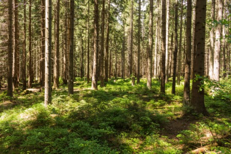 Visit the Bernheim Research Forest This May