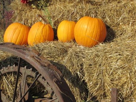 Go to a Picnic at Foxhollow Farm September 9