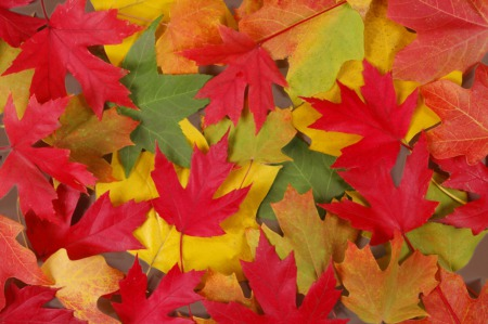 Celebrate ColorFest in Bernheim Forest October 20