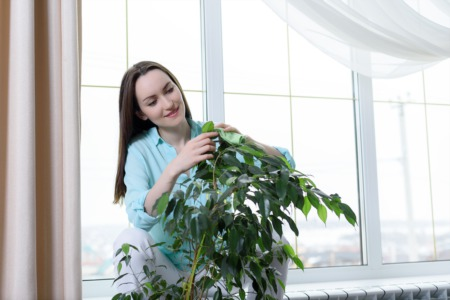 Go to Houseplants Anonymous at Yew Dell Botanical Gardens February 20