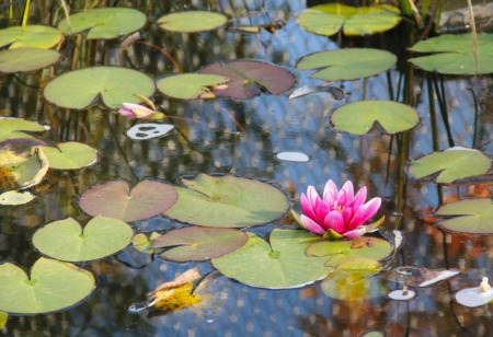 Enjoy Pavilions, Ponds and Poetry Event at Crane House April 16