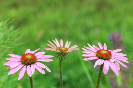 Learn How to Grow Native Plants at the Louisville Nature Center April 24