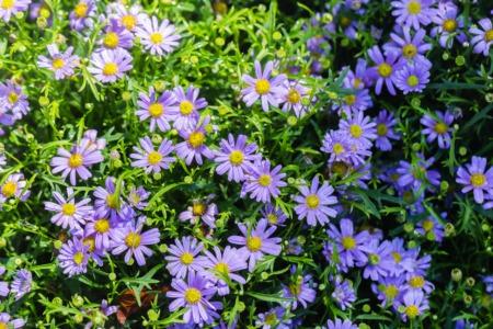 Enjoy Bourbon and Botanicals in Crestwood June 20