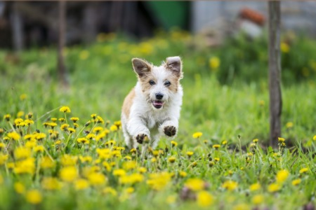 Take Your Hound to the Yew Dell Botanical Gardens September 29