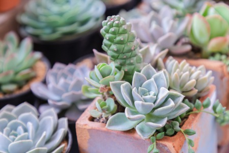 Get Artistic with Plants at Mimi's Cafe March 16