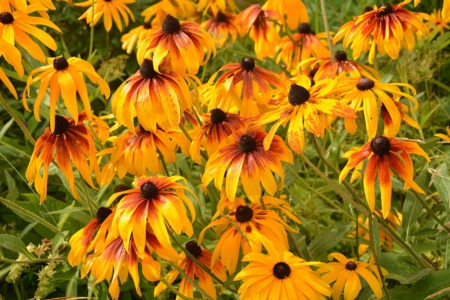 Learn How to Divide Perennials September 12