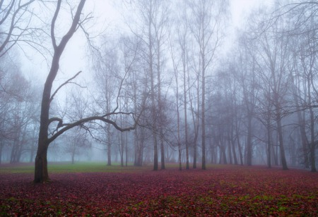 Go for a Walk in the Forest This February