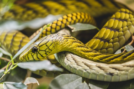 See Reptiles and Exotic Pets June 26