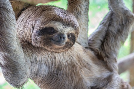 Meet the Sloths at the Louisville Zoo This August