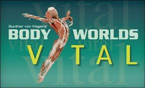 Body Worlds Vital Exhibit at the Kentucky Science Center