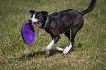 Jumpin' for Juleps Disc Dog Qualifier April 13th-14th
